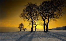 Preview wallpaper Winter, snow, trees, sunset, silhouette