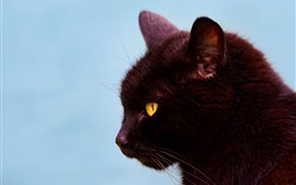 Preview wallpaper Black cat, side view, head, yellow eyes, ears