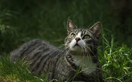 Preview wallpaper Cat look up, grass