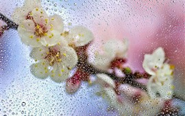 Preview wallpaper Glass, water droplets, flowers, hazy