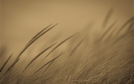 Preview wallpaper Grass, hazy background, dusk