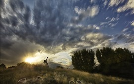 Preview wallpaper Grass, trees, shooter, sky, clouds