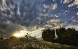 预览壁纸 草,树,射手,天空,云
