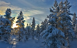 Norway, Hedmark County, trees, snow, sun rays, winter