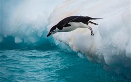 Preview wallpaper Penguin, jump, floe, ice, sea