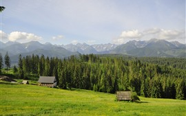 Poland, Tatry, houses, mountains, trees, grass