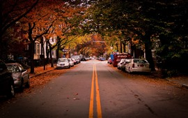 Road, trees, cars, city, autumn, USA