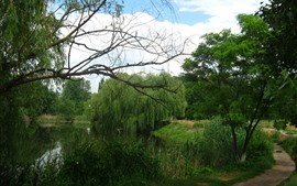 Preview wallpaper Summer, trees, willow, river, road