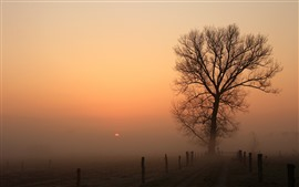 Preview wallpaper Trees, road, fence, sunrise, fog, dawn