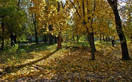 Preview wallpaper Ukraine, trees, yellow leaves, autumn