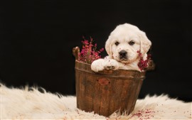 White puppy, bucket, flowers