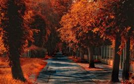 预览壁纸 秋天,树木,道路,红叶,草