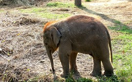 Preview wallpaper Elephant cub, grass, sunshine