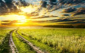 壁紙のプレビュー フィールド、花、道、夕日、空、雲