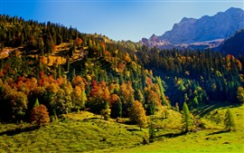 Preview wallpaper Forest, trees, shadow, mountains, autumn, nature