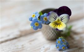 미리보기 배경 화면 잊지 못한 꽃, 푸른, 흐린