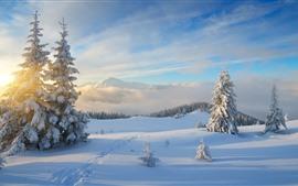 Снег, деревья, восход солнца, туман, горы, зима