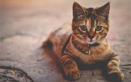 Preview wallpaper Striped cat, look, cute pet