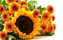 Подсолнечник и хризантема, желтые цветы, белый фон