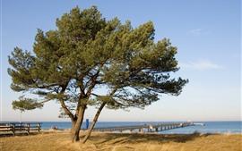Árbol, muelle, puente, mar, hierba