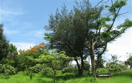 Trees, grass, fence, summer