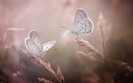 Preview wallpaper Two butterflies, grass, insect, hazy