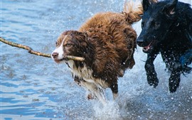Preview wallpaper Two dogs running in water, splash