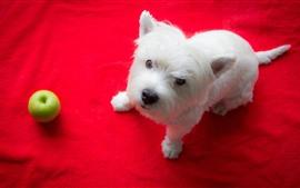 Perrito blanco, manzana verde, fondo rojo