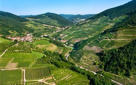 Áustria, campo, plantação, montanhas, casas