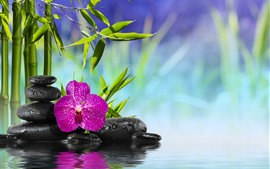 Bambus, grüne Blätter, Steine, rosa Phalaenopsis, Wasser, Spa