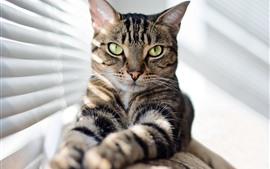 Aperçu fond d'écran Look chat, yeux verts, fenêtre, soleil