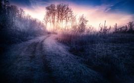 Amanhecer, grama, árvores, estrada, nevoeiro, estilo hdr