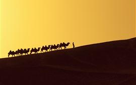 Deserto, duna, camelos, silhueta
