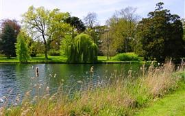 Aperçu fond d'écran Angleterre, Peterborough, Parc, saule, arbres, lac, herbe