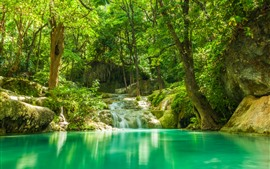 Preview wallpaper Forest, stream, stones, trees, jungle, lake
