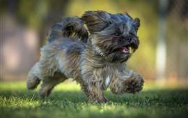 壁紙のプレビュー 毛皮の子犬走行、草