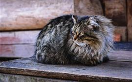 Gato gris mira hacia atrás, resto