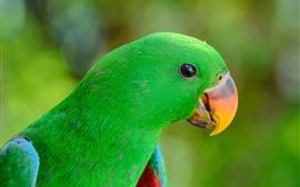 Зеленый попугай, птица, клюв, глаз