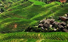 Террасы Longji, зеленый, наклон, деревня, Китай