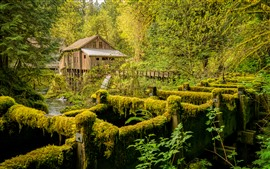 Preview wallpaper Mill, river, trees, moss, USA