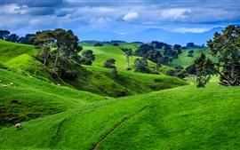 Nueva Zelanda, montañas, árboles, prado verde, ovejas