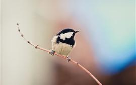 Um pássaro, penas pretas e brancas, galhos