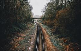 Railroad, bridge, trees, fog
