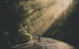 Carretera, árboles, personas, rayos de sol.