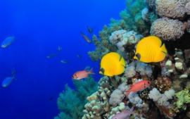 미리보기 배경 화면 일부 물고기, 바다, 산호, 수 중