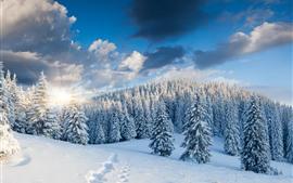 Толстый снег, деревья, лес, восход солнца, зима, утро