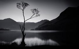 Дерево, горы, озеро, черно-белое изображение