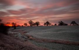 壁紙のプレビュー 木、赤い空、夕日、畑、草