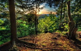 Preview wallpaper Trees, sunrise, morning, mountain top