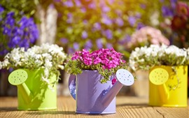 Watering can, pink and white flowers, flowering, sunshine
